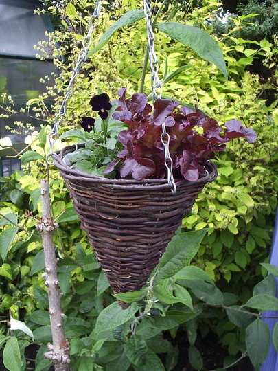 Wicked Witch's Planter