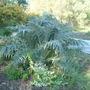 Taricq_garden_may_2nd_2008_021