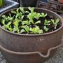 Pot of Salad