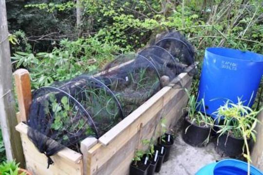 Raised veg bed 1