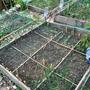Mixed veg bed
