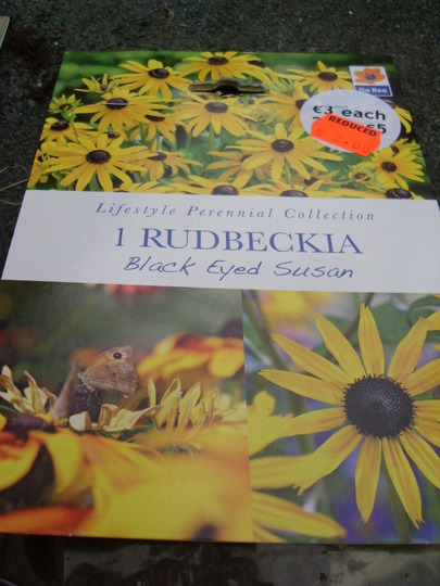 Black eyed susan  bought today