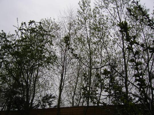 trees in my garden
