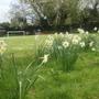 our garden/footy field!!!!
