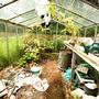 Greenhouse September 2008
