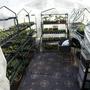 Greenhouse April 2010