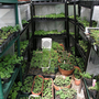 Small polytunnel