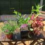 New_plants_005