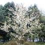 Flowers_spring_009