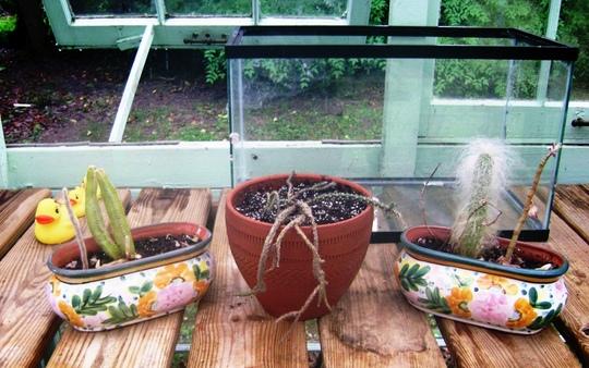 cactus_salvage.jpg