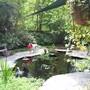 same pond another angle