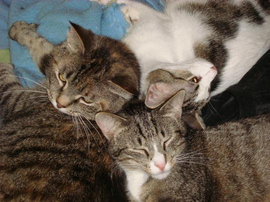 Chloe, Pinecone and Polo
