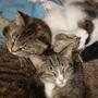 Cats_apil_30_046