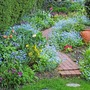 Path through the Forget-me-Nots (Myosotis)