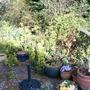 Euphorbia and pots