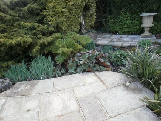 Bog Garden (Gunnera manicata (Gunnera))