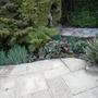Bog_garden