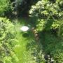 our neglected garden...