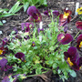 Viola ' Rocky ' from Janette. Thank you .