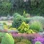 English_conifer_garden_