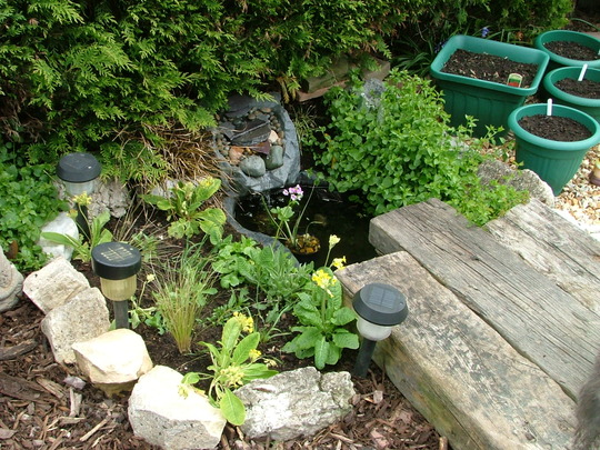 Small Wildlife Pond Grows On You