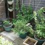 my little veg plot.