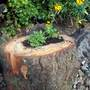 My new log planters