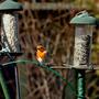 Robin arrangement