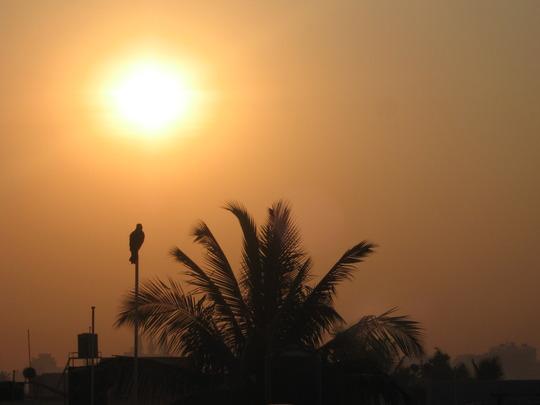 sunrise amidst a coconut tree