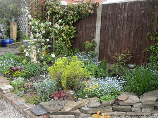 Flower bed (Euphorbia cyparissias (Cypress Spurge))