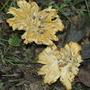 mushroom fungi #5