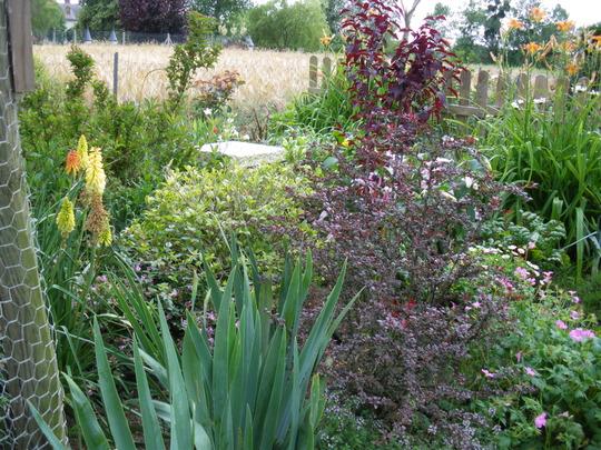 Part of our rear garden
