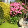 Garden_pictures_001