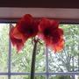 4 blooms open now