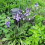 Bluebells By Decking