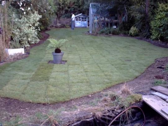 The new turf finished but I've murdered the tree fern (Dicksonia Antartica 'Tasmanian Tree Fern')