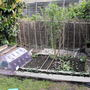 New Veg Patch :)