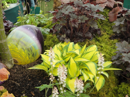 Hosta remember me with a wonderful Easter egg