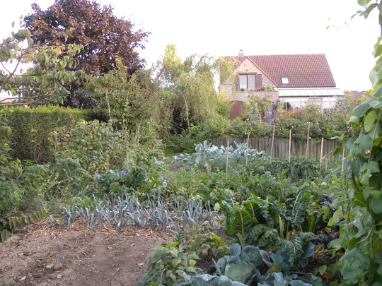 vegetable plot (Allium porrum (Leek) Beta vulgaris Phaseolus coccineus)