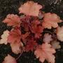 _leaves_