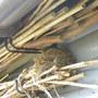 2de_nest__nu_op_bamboestokken_250410.jpg