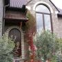 Plant_aan_voordeur_rood_verkleurd_121009