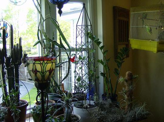 New obelisk for a Caudiciform plant