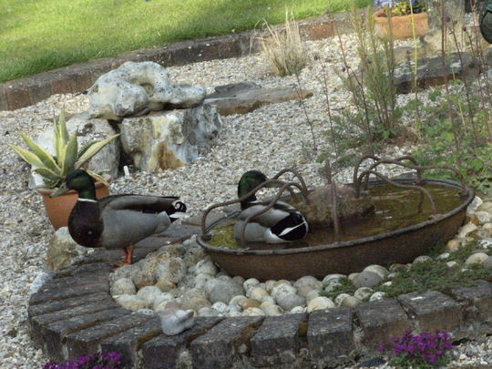 Two of the Ducks are back