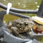 such a cute fellow...he's back perched on the pump...must be warm there.
