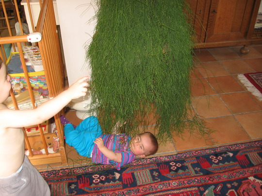Elin has found a good hiding place under the Rhipsalis cassutha (Rhipsalis cassutha)