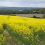 Spring in Kent