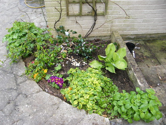 shade border by house