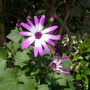Another_senetti