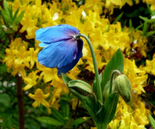 garden_17-5-2010_017.jpg